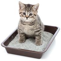 Behavior Kitten