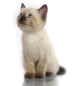 General Image - Kitten3