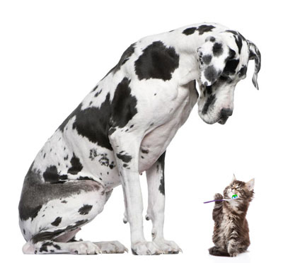 Pet Dental HealthMonth